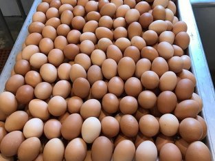 EGGS- wholesale and Ratail